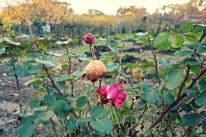 flowers-back-garden