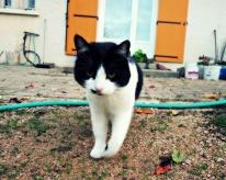 kitty-cat